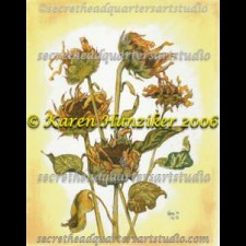 Dried Brown-eyed Susans